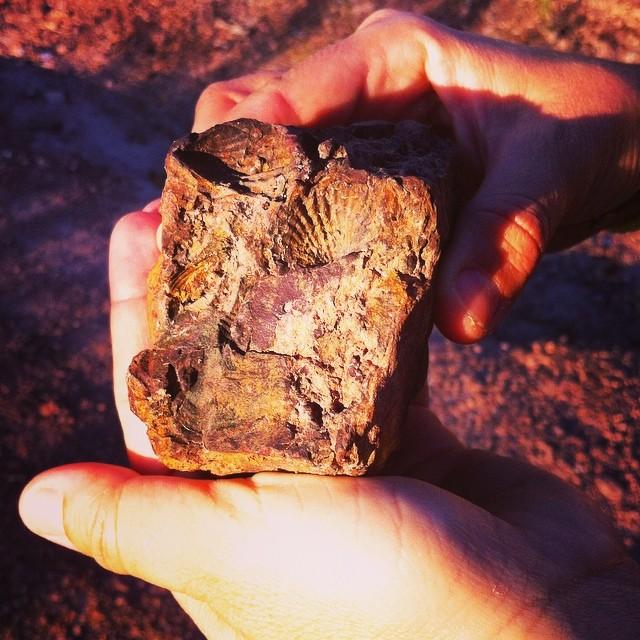 A região da Chapada já foi mar há 1,5 milhão de anos? E no meio de uma trilha, encontrei essa pedra com fósseis de conchas. #IndiAnnaJones #LaraCroft obs: Não, eu não roubei a pedra. deixei lá pra outros visitantes tb encontrarem