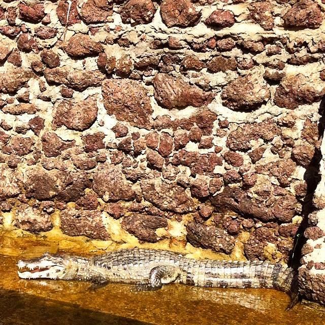 Viagem ao Pantanal, por Anna Crô | Ovelha