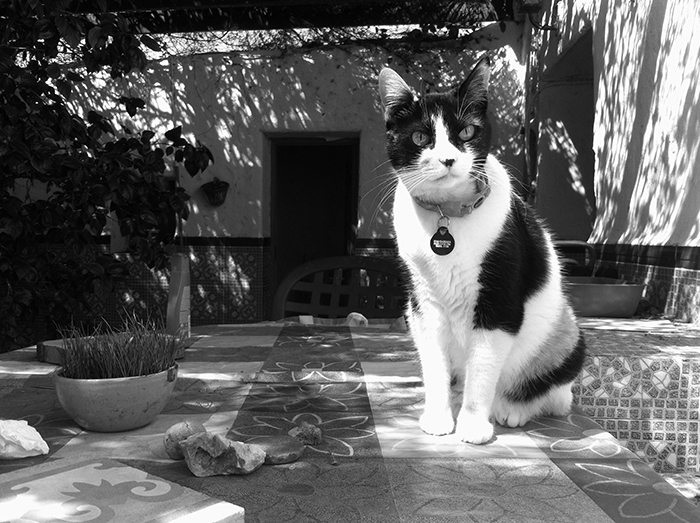 Miel faz 12 anos agora em abril e está com a saúde em dia <3 Ela tem olho de cobra, com certeza seria Slytherin